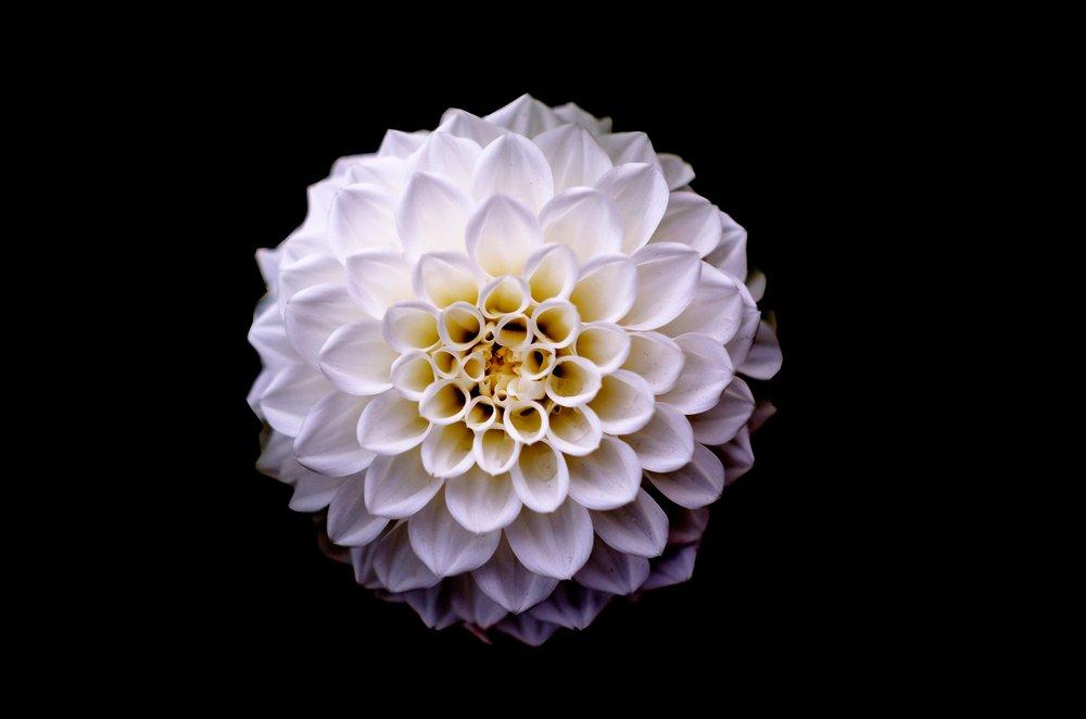 background-beautiful-bloom-669502.jpg