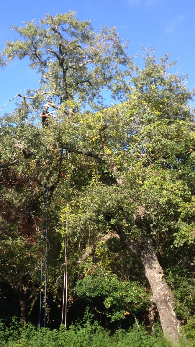 Canopy Inspection, Vine Removal