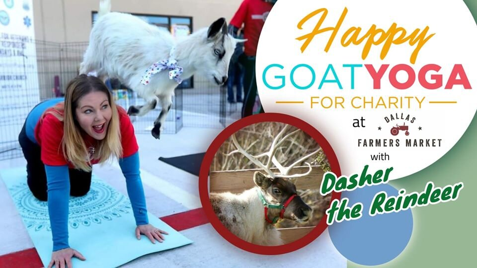 Happy Goat Yoga W Reindeer Photo Op At Dallas Farmers Market Fitness Ambassadors