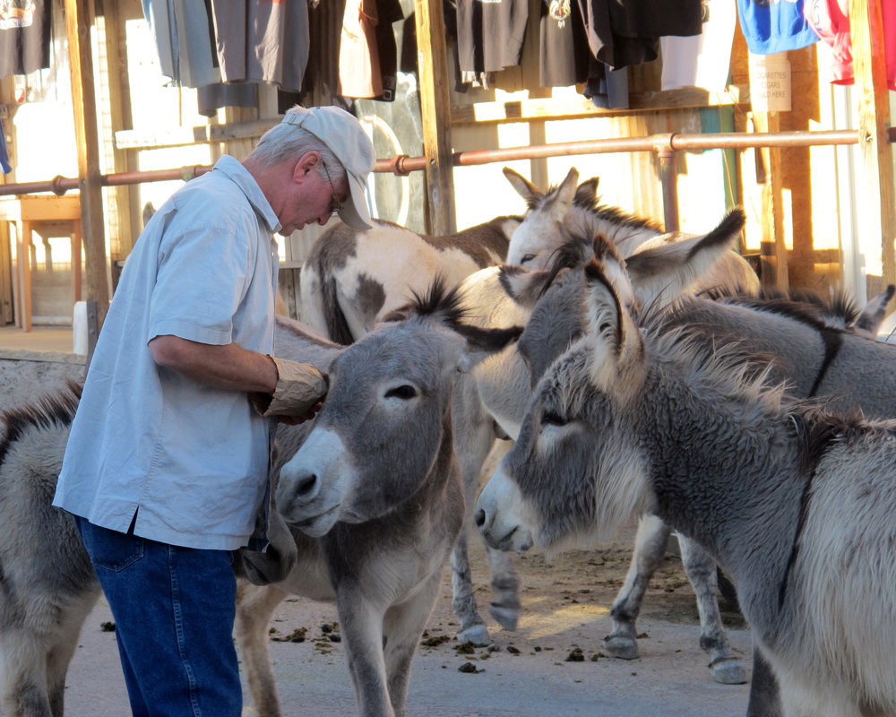 Kingman AZ burros.jpg