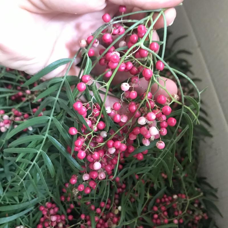 - Peppercorn tree berriesSchinus molleAmazing colour, amazing aroma. Sweet. peppery, bright, just glorious.