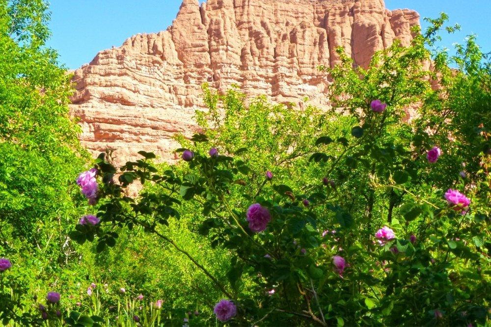 vallee-des-roses-maroc-1024x683.jpg