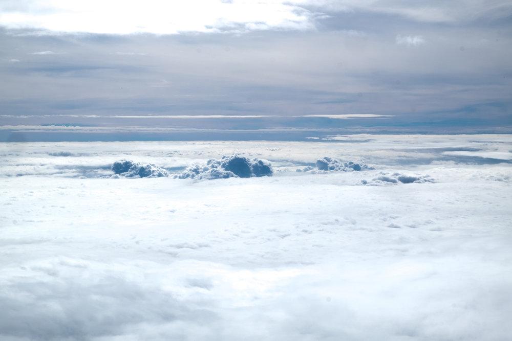 SAP Cloud ERP