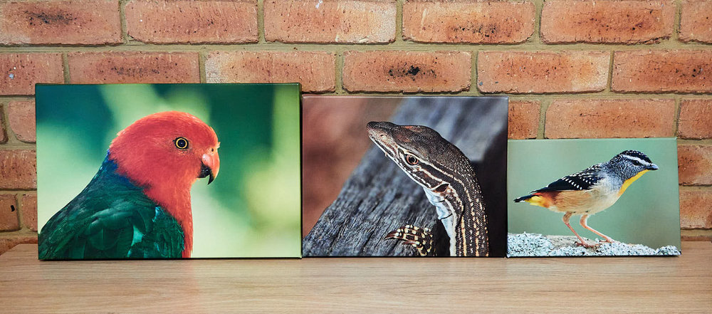 CANVAS WRAP PRINTS     High quality canvas prints.