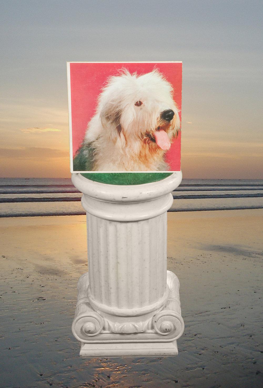 beach_dog.jpg