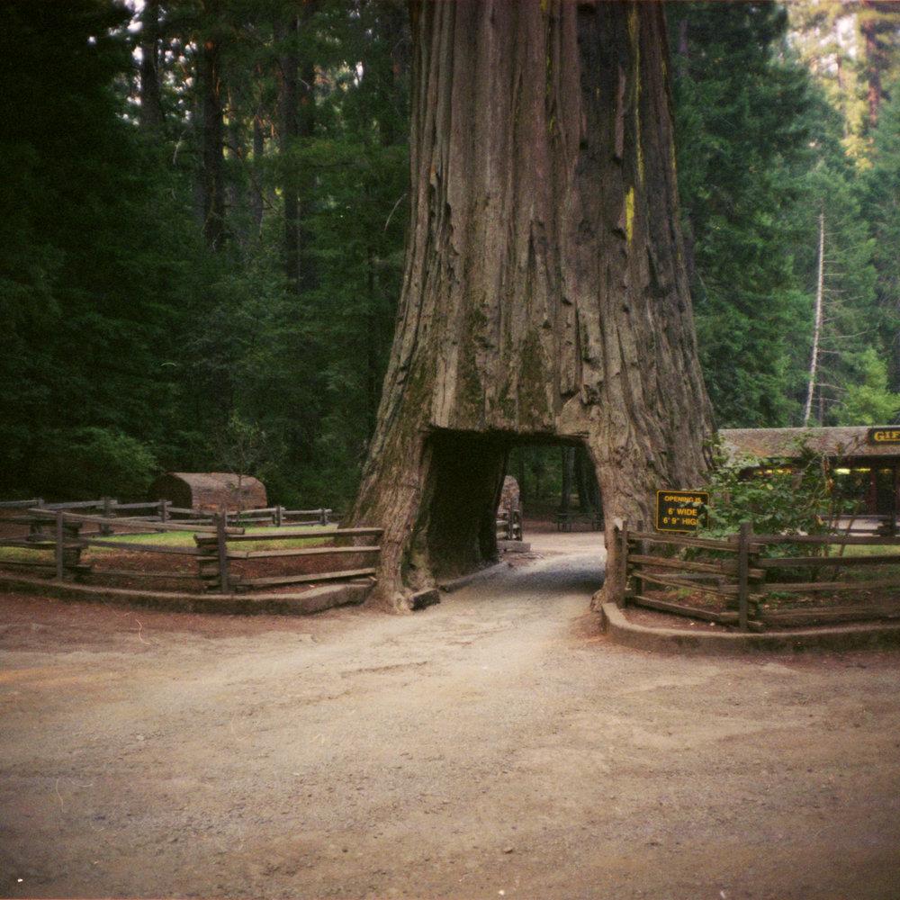 drive_thru_tree_02.jpg