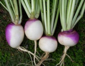turnips001