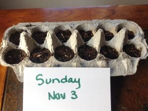Nov 3 seeds