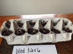 Nov 6 seeds