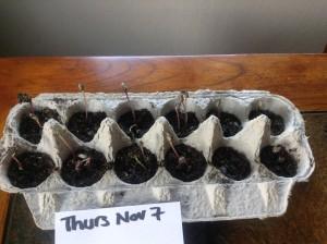 Nov 7 seeds