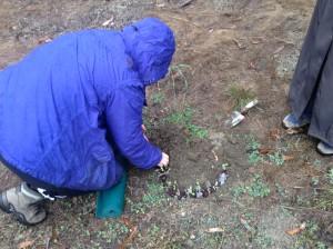 Shirley planting 1