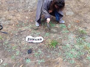 Tammy planting