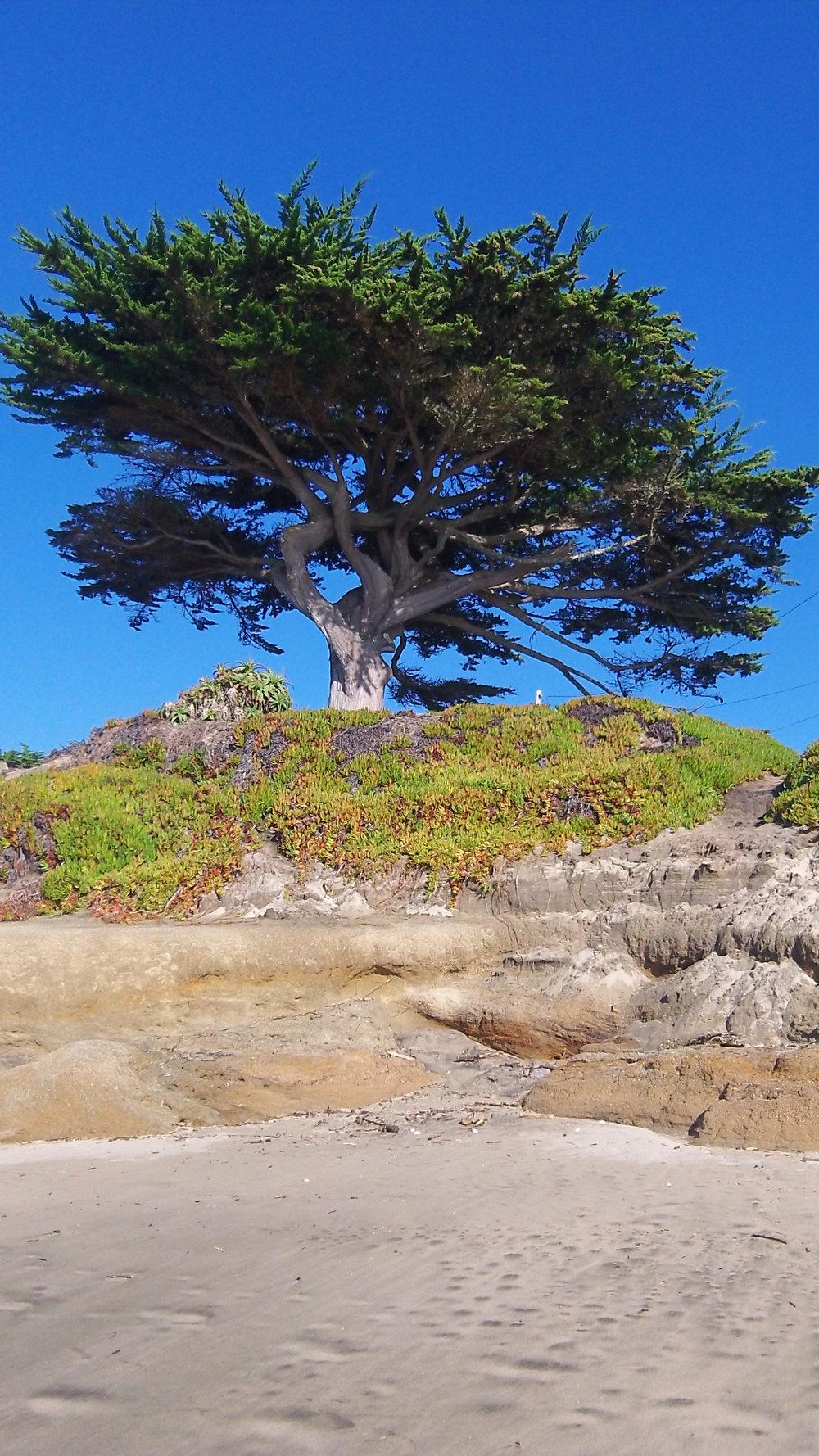Tree on 12-7-12.JPG