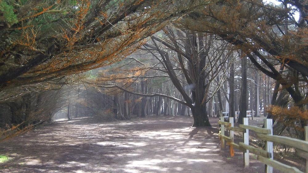 Cypress Grove at Fitzgerald Marine Reserve, Moss Beach, CA