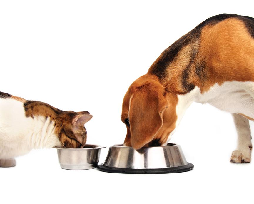 Companion Pet Nutrition