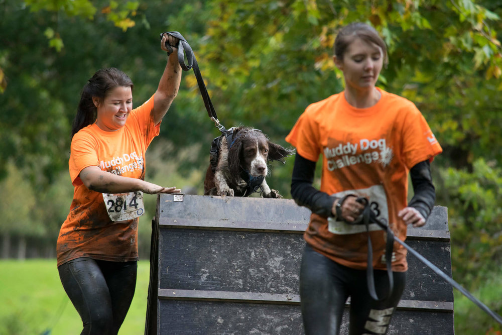 Scaling the heights at the Muddy Dog Challenge