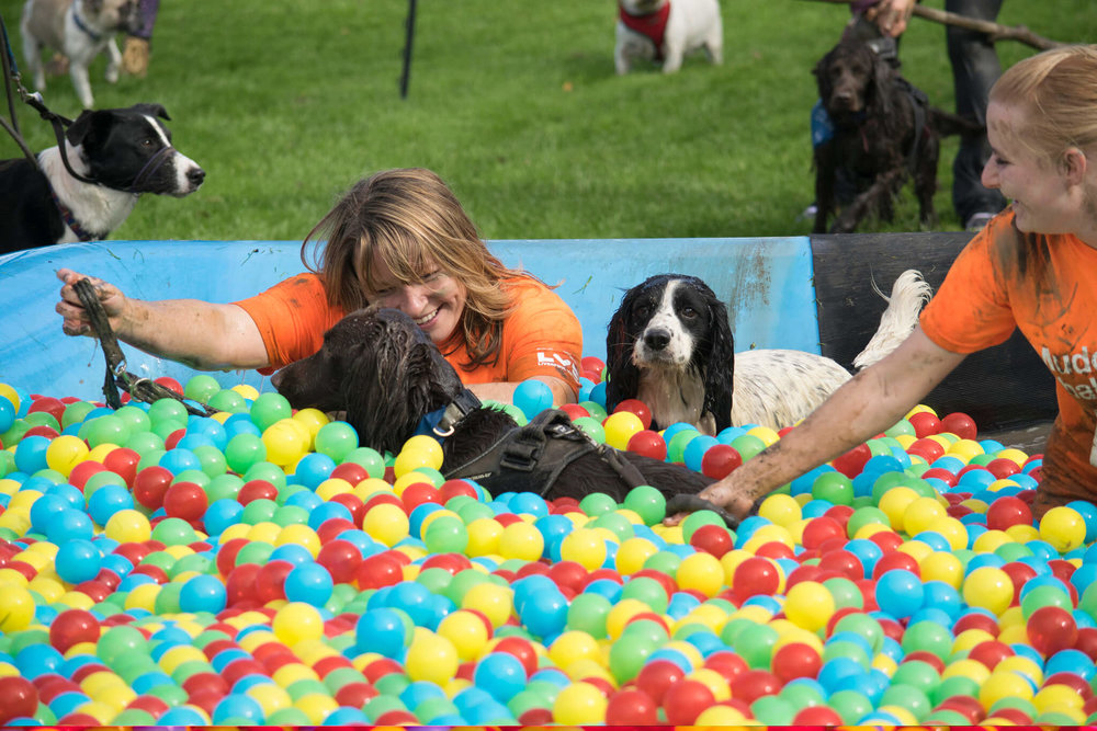 Enjoying the ball pit at the Muddy Dog Challenge