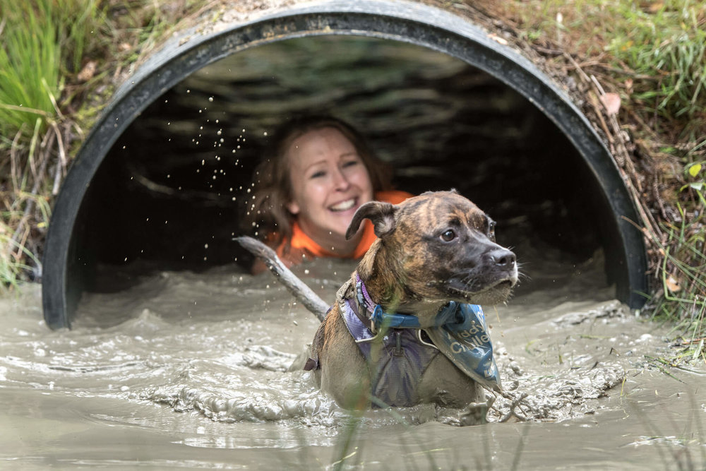 Emerging from the tunnel at the Muddy Dog Challenge