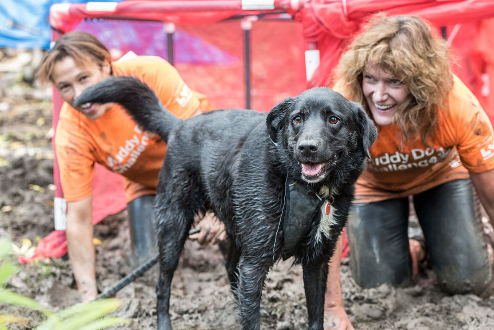 Mud and sweat at the Muddy Dog Challenge