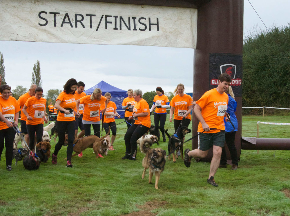 Dogs and humans at the start of the Muddy Dog Challenge