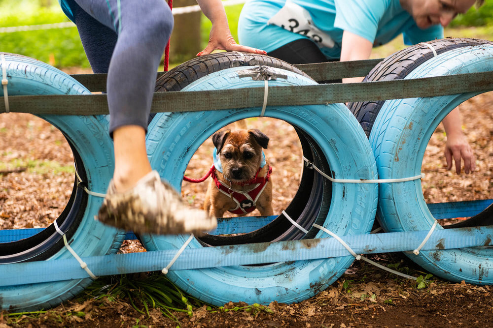 Muddy Dog Challenge 2018 - Nottingham