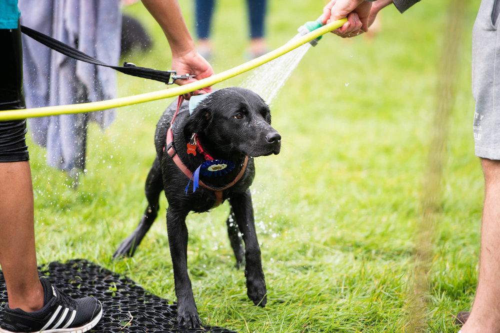 Muddy Dog Challenge 2018 - Nottingham