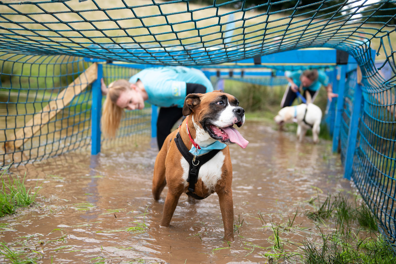 Muddy Dog Challenge 2019 | Battersea