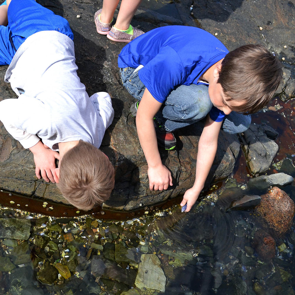 Exploring the tide pools during an afternoon excursion