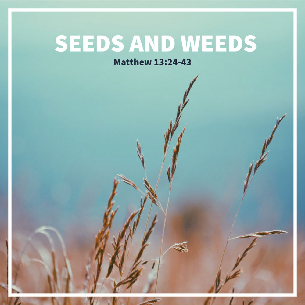 seeds and weeds.jpg