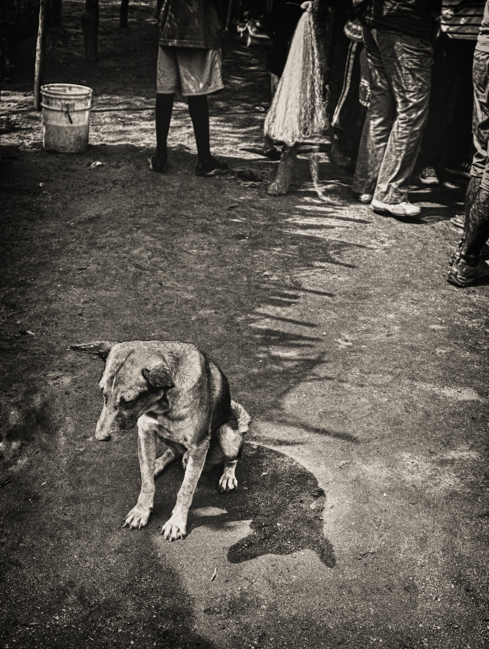 lonesome dog.JPG
