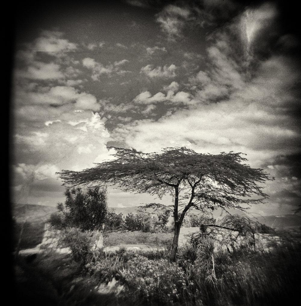 Tree Haiti.JPG