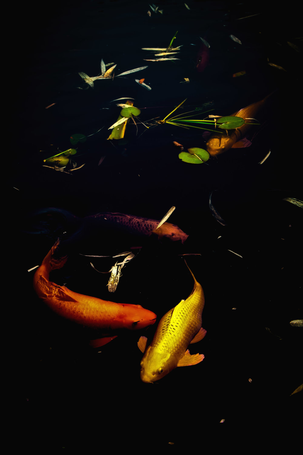 The Koi Pond-2.jpg