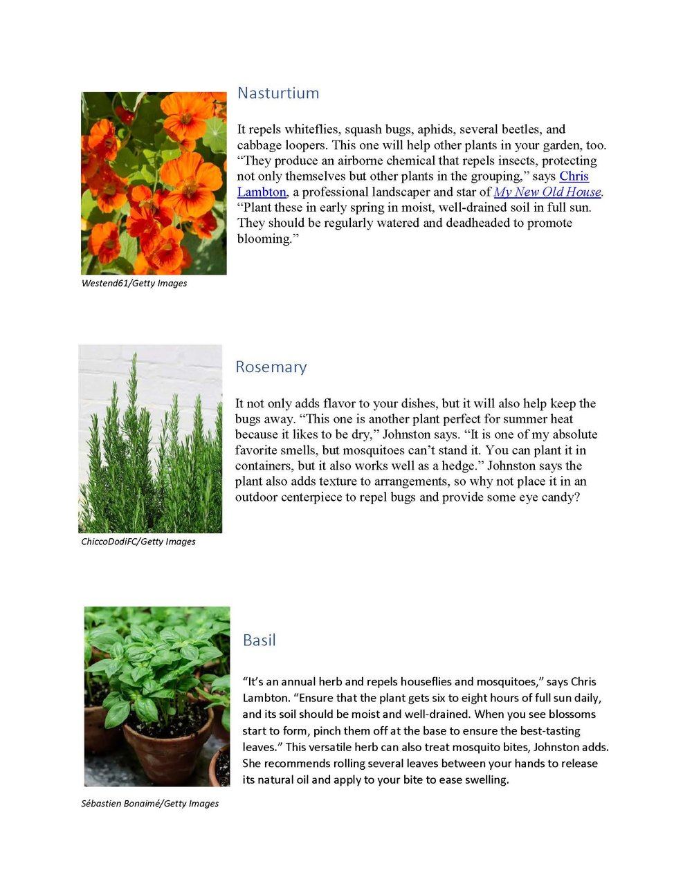8 Plants That Repel Bugs_Page_2.jpg