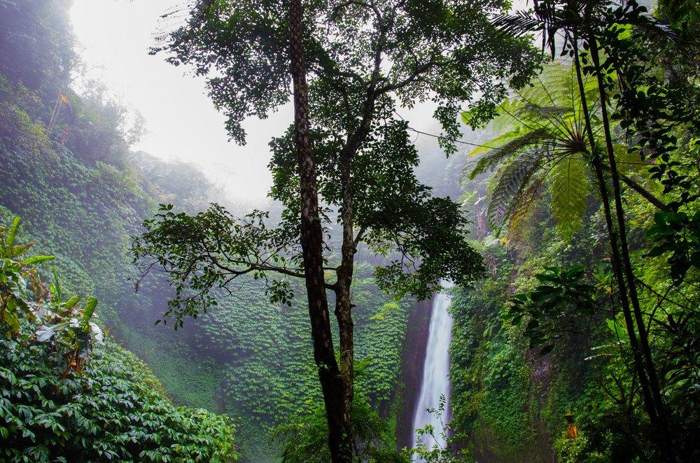 forest-jungle-nature-2079.jpg