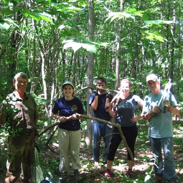 Volunteers work to remove Bittersweet vines from Sewall Woods Preserve.
