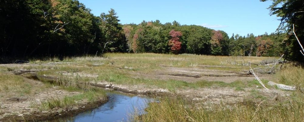 Little-River-Downstream-of-Phragmites-Site-09-27-12-Large.jpg