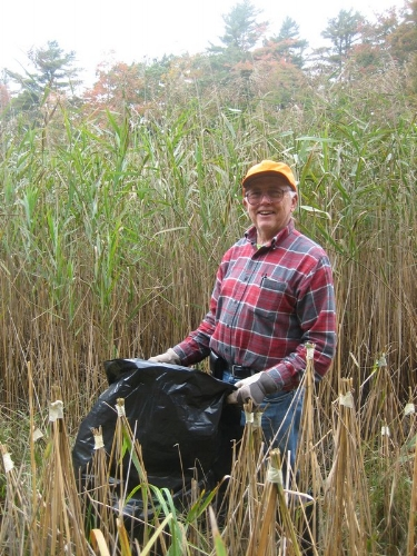 For the love of the land.  Bob Lundstrom worked alongside KELT volunteers and professionals to remove the invasive Phragmites out on the marsh in 2012. Bob passed away in 2015. He was adamant that the causeway be removed to help stop vthe spread of the invasive plant and return the marsh to a healthier state.