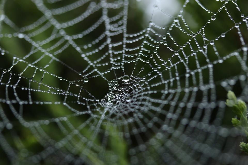 spider-web-1030877_960_720.jpg