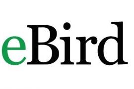 ebird logo.jpg