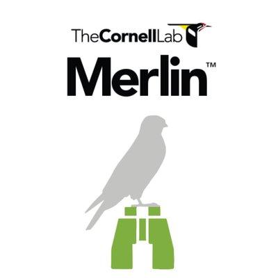 Merlin Logo.jpg