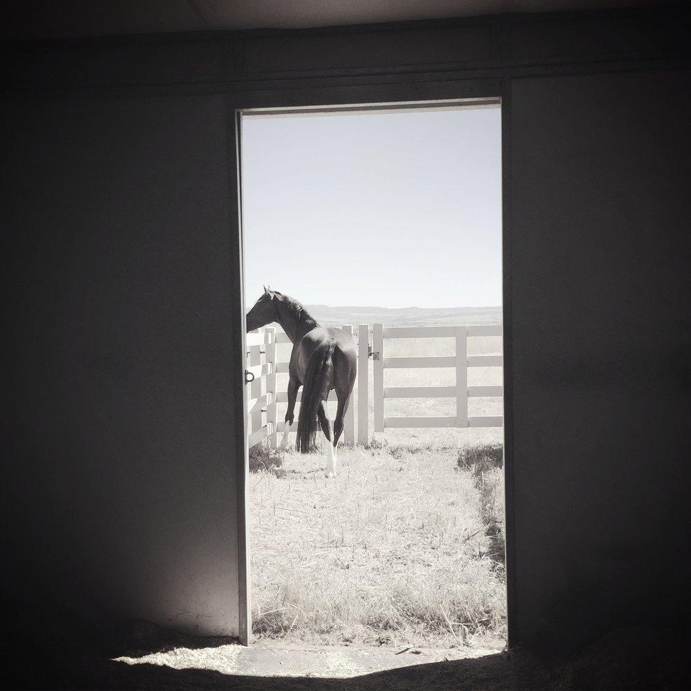 bLUTO DOOR.jpg