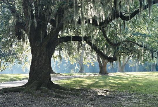 Tree with moss.jpg