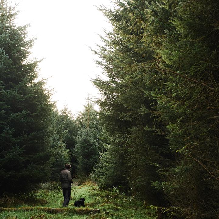 noel-mccullough-spruce.jpg