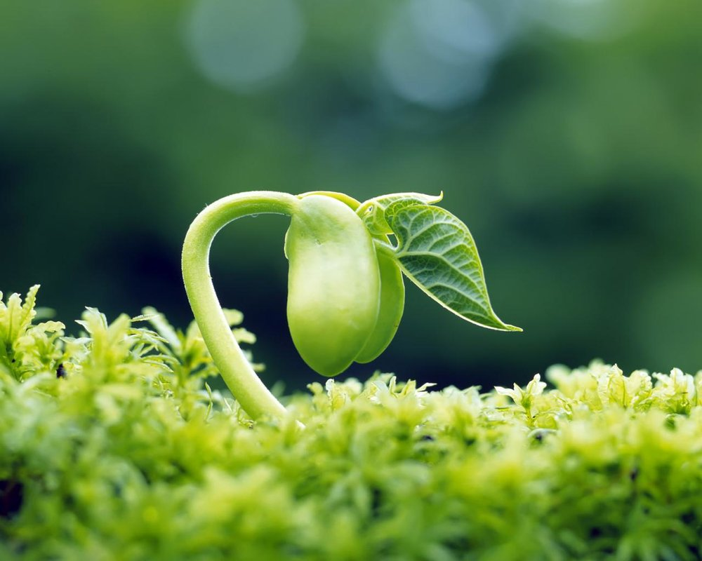 3sprout-leaves-fresh-hd-desktop-wallpapers-1280x1024.jpg