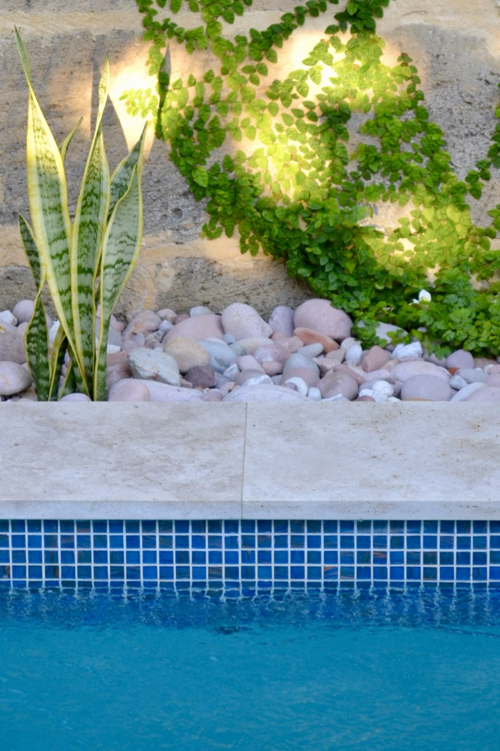 Creeping fig adorns the limestone wall, with mother-in-law's tongue emerging from a bed of river stones. Travertine coping and azure blue water line tiles, create a pleasing backdrop to the pool.