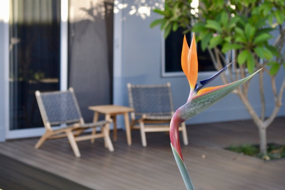 A bird of paradise overlooks this inviting seating corner, sheltered by a frangipani tree, which appears to emerge from the composite timber decking.