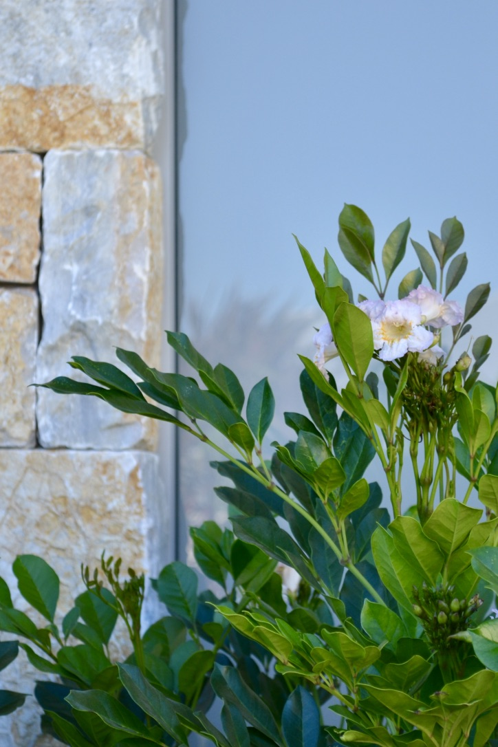 Summerscent asian bell and Coolum Random Ashlar stone walling.