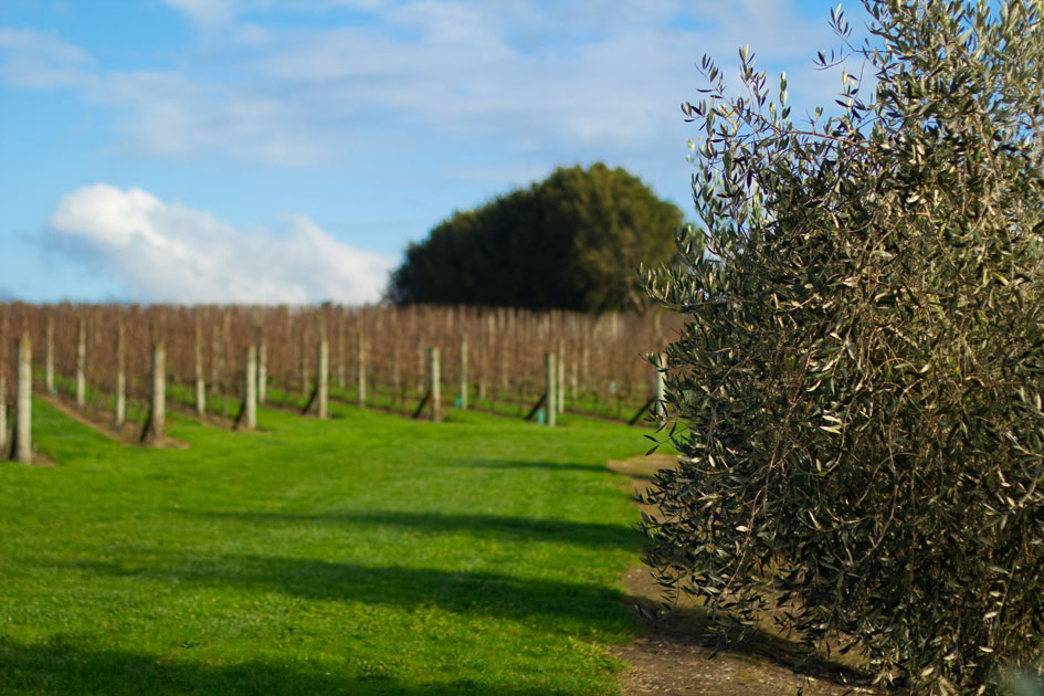 soljan winery