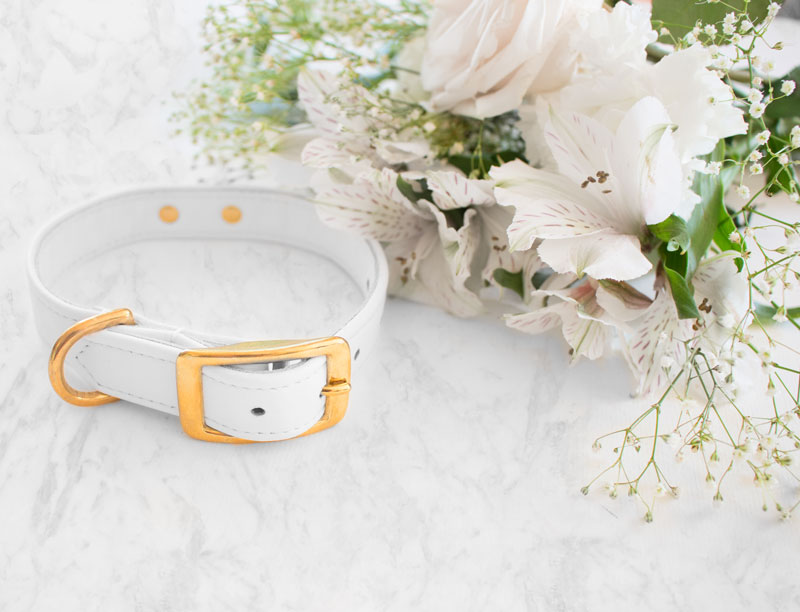 Hound Collection Collar in Rich, white leather for the chicest of pups