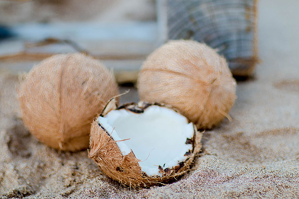 coconuts on beach in Maui Hawaii